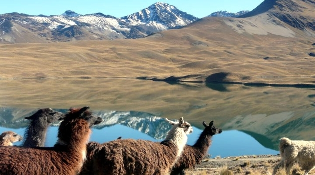 Condoriri-Choro-Llamas-bei-Tuni.jpg